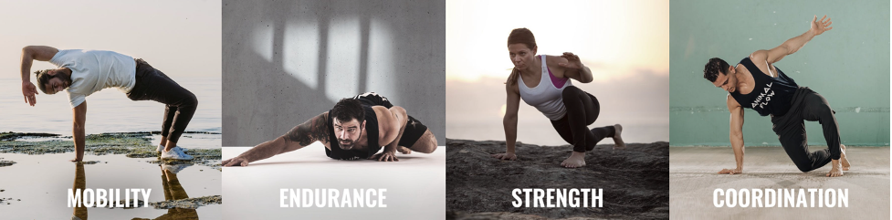 mobility, endurance, strength, coordination
